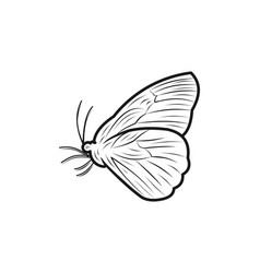 butterfly line logo designs inspiration isolated vector image