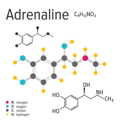 Chemical formula of the adrenaline molecule vector