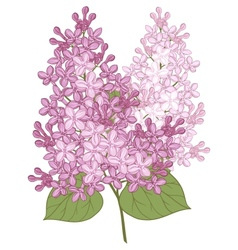 Flowers lilac for your design vector