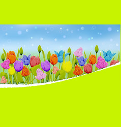 multicolored tulips on a blurred meadow background vector image