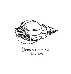 Set of hand drawn sea shells vector