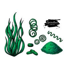 spirulina seaweed powder hand drawn vector image