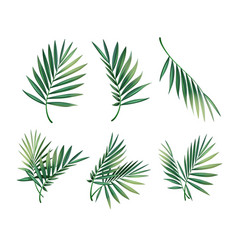 Set of palm leaves vector