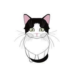 a little gentle favorite kitten girl vector image vector image