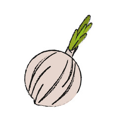 Vegetable icon vector
