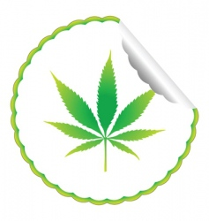 cannabis leaf label vector image