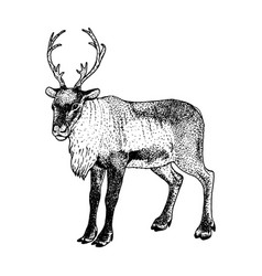 Hand drawn reindeer sketch vector