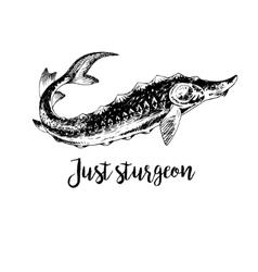 Hand drawn sturgeon vector