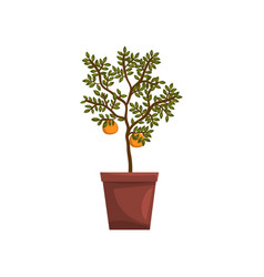 Kumquat indoor house plant in brown pot element vector