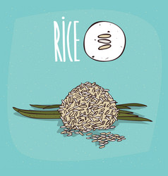set of isolated plant rice grains herb vector image