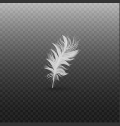 Single fluffy white feather falling or hovering vector