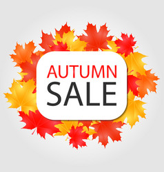 autumn sale banner discount offer with vector image vector image