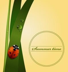 Green grass stem dew drops cute ladybug vector
