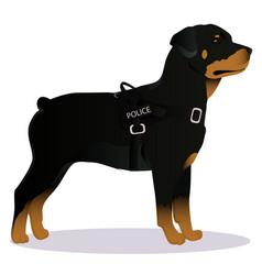 Rottweiler police dog vector