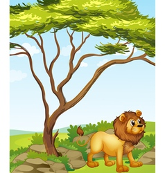 A lion at the right side of a big tree vector image