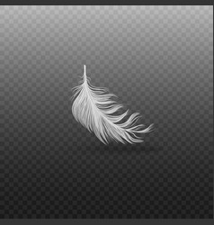 Falling and soft realistic white bird feather with vector