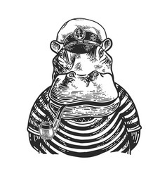 hippo captain engraving vector image