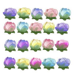 set colorful flower buds isolated on white vector image