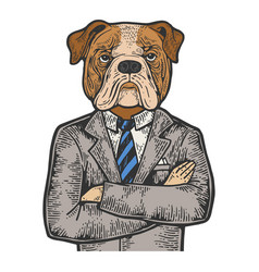 bulldog businessman color engraving vector image