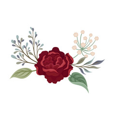 Dark red rose with large petals vector