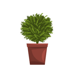 Green indoor house plant in brown pot element for vector