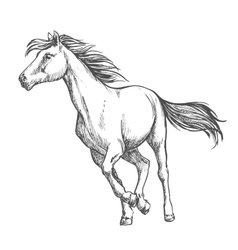 White horse freely running sketch portrait vector image
