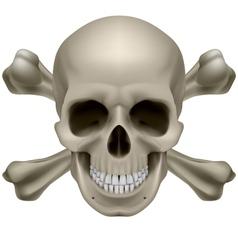 Realistic skull and bones vector image vector image