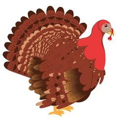 Cartoon Turkey Bird2 vector