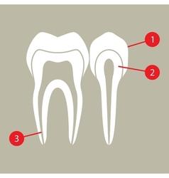 Diagram of teeth vector