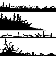 Meerkat foregrounds vector image