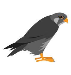 Predatory bird on white background vector