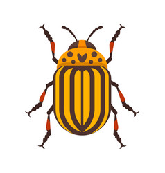 flat style of colorado beetle vector image