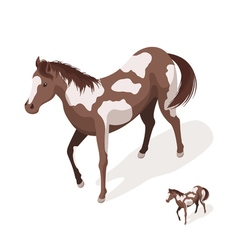 Isometric 3d of pinto horses vector image vector image