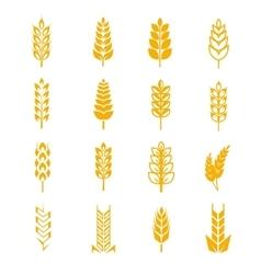 Wheat ears bread symbols vector image
