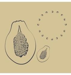a papaya fruit with seeds vector image