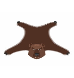Bear pelt big brown bear grizzly hide hunting vector