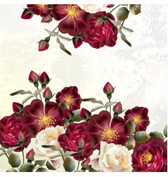 beautiful background or invitation with rose vector image
