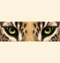 big eyes eyes a leopard close up vector image