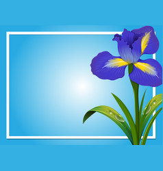 Border template with blue iris vector