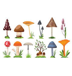 collection mushrooms and toadstools vector image