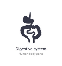 Digestive system outline icon isolated line from vector