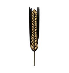 ear of barley natural vector image