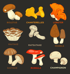 Edible mushrooms isolated flat icons set vector