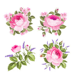 set blooming flowers for your design vector image
