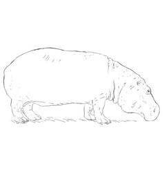 Single sketch hippo vector