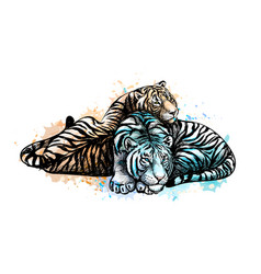 Two tigers yellow and white from a splash of vector