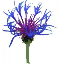 wild blue flower vector image vector image