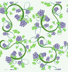 background vines and bunches grapes vector image