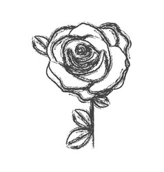 blurred silhouette sketch flowered rose with vector image vector image
