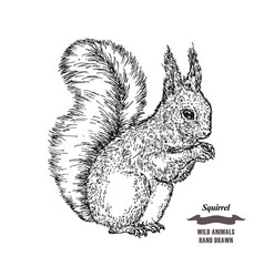 forest animal squirrel hand drawn black ink vector image vector image